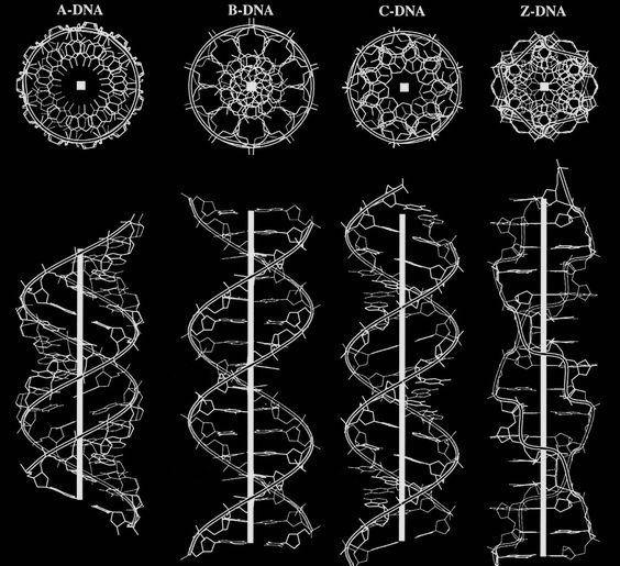 Principy posvátné geometrie aDNA
